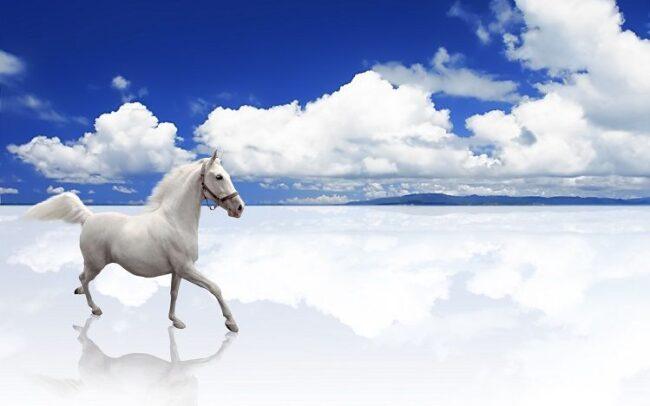 Petites nouvelles russes - Un cheval blanc sur une mer de nuages